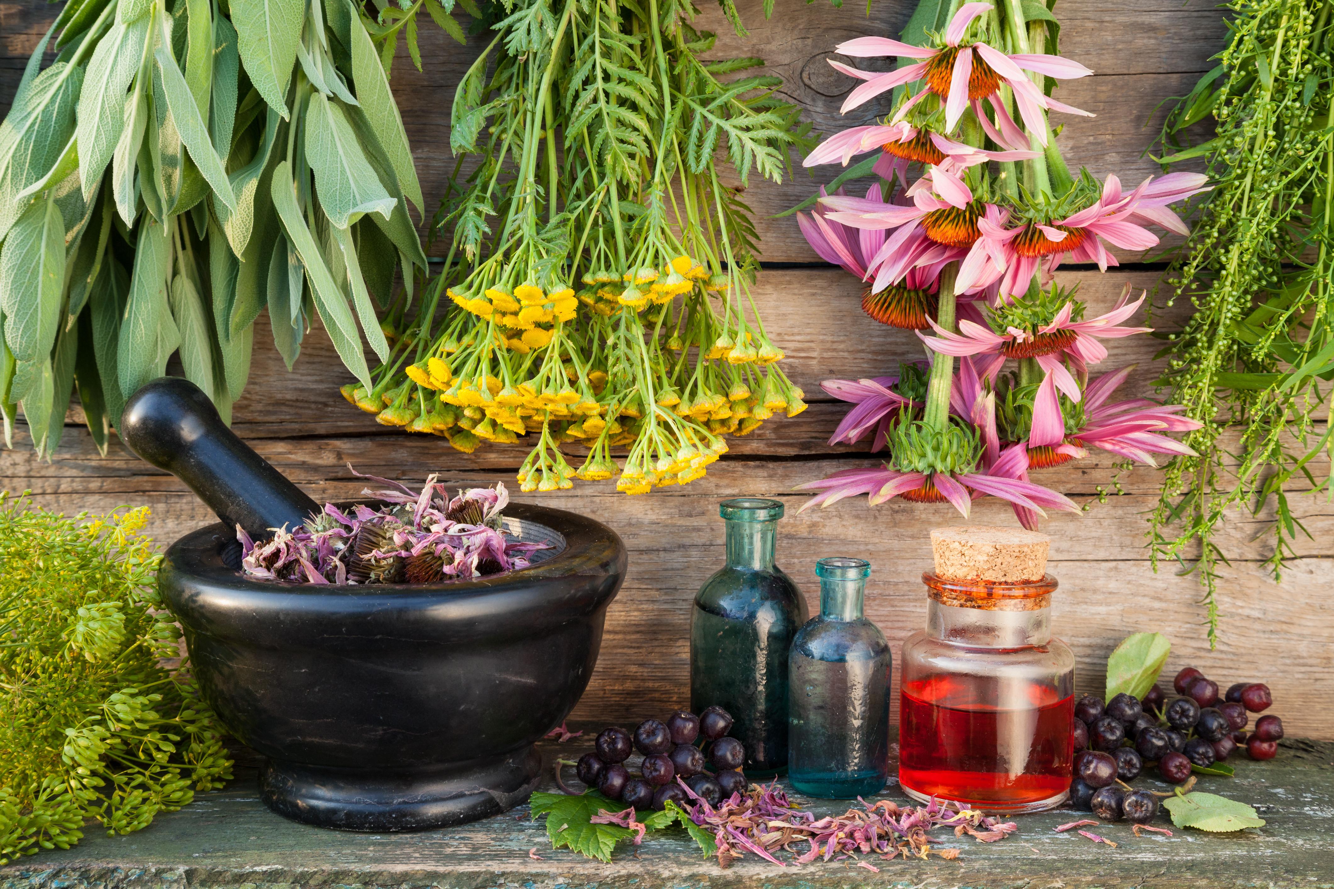 plantes medicinales les